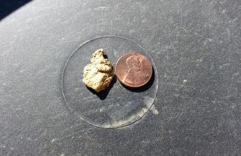 picture of Marshall's gold nugget